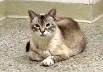 cat found in Greenfield Park