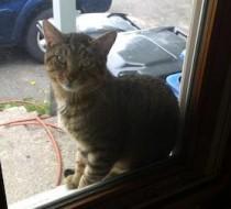 cat found in Roxton pond