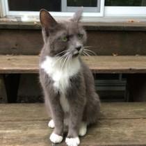 cat found inTMR
