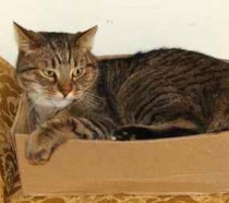 cat lost in St-Henri
