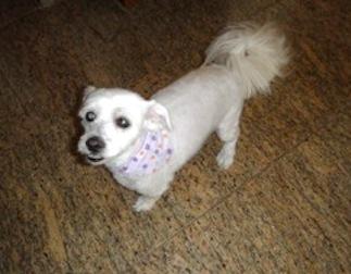 dog lost in Villeray