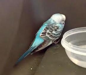 bird found in St Hubert