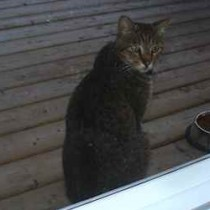 cat found in Chertsey