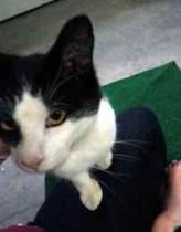cat found in Drummondville
