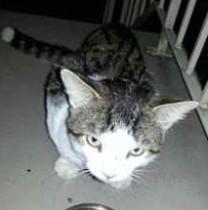 cat found on Île des Soeurs