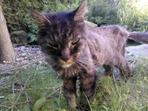 cat found in Pincourt