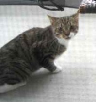 cat found in les Cedres
