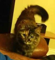 cat lost in Candiac