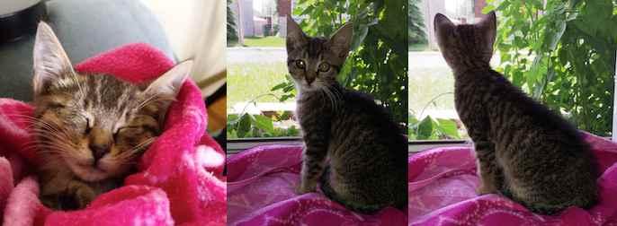 kitten lost in La Plaine