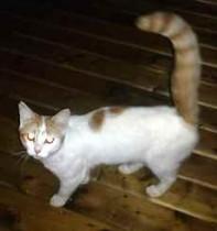 cat found in McMasterville
