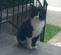 Black and white cat found in T.M.R.