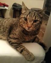 cat found in Sherbrooke