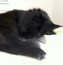 cat lost in Trois Rivières