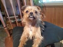 dog found in Joliette