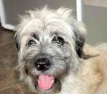dog found in Laval des Rapides