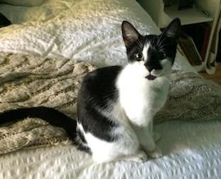 kitten found in St Jérôme