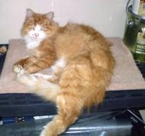 cat found in Cowansville