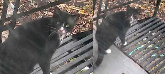 cat found in Hochealga