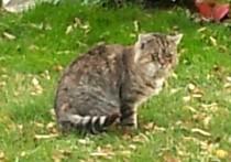 cat found in La Prairie