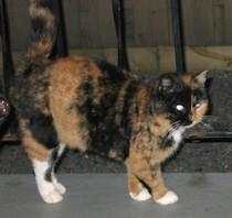 cat lost in St Henri