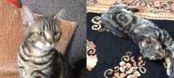 cat found Ville Emard t