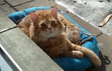 cat lost in St Bruno