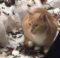 cat found in Pointe St Charles