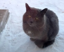 cat found in Blainville