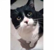 cat found in Granby
