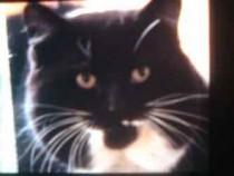 cat found in LaPrairie