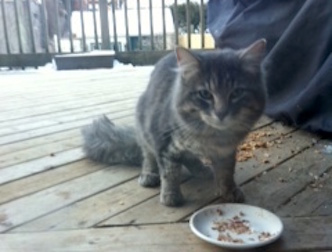 cat found in NDG