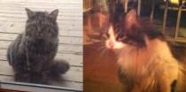 2 cats found in Ste-Adèle