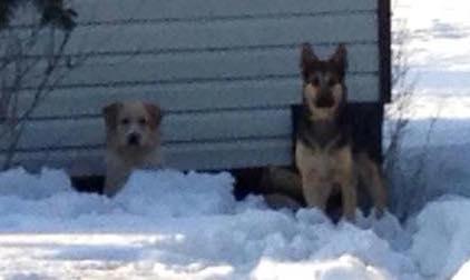 2 dogs found in Harrington