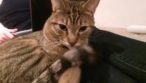 cat found in CDN