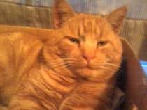 cat found in Ile Bizard
