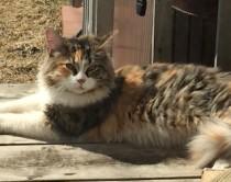 cat found in St-Jean-sur-Richelieu