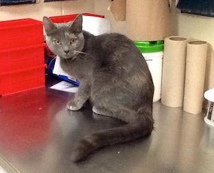 cat found in Villeray