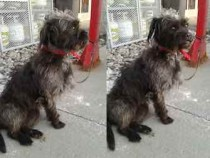 dog found in La Plaine