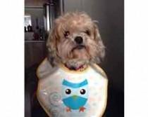 dog lost in Pointe Calumet