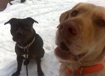 dog lost in Ste Julie