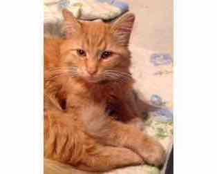 kitten found La Plaine or