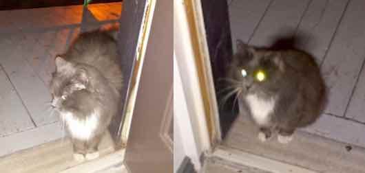 cat found in Hochelaga