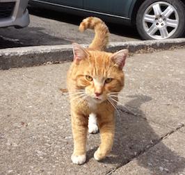 cat found in Pointe-aux-Trembles
