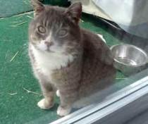 cat found in St-Remi-de-Napierville