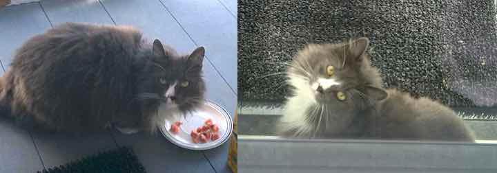 cat found in St-Roch