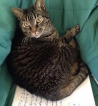 cat lost in Mont Tremblant t