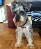 dog found in St-Leonard