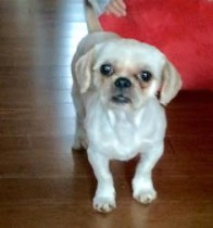 dog found in Terrebonne