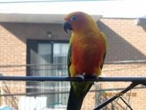 bird found in Hochelaga