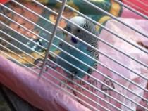 bird found in Pincourt